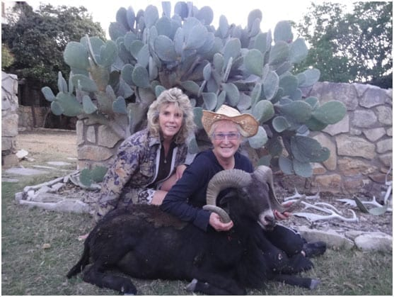 I was interested in a nice Texas Dall Ram or a Hawaiian Black Ram, and we believed both to be in the vicinity.
