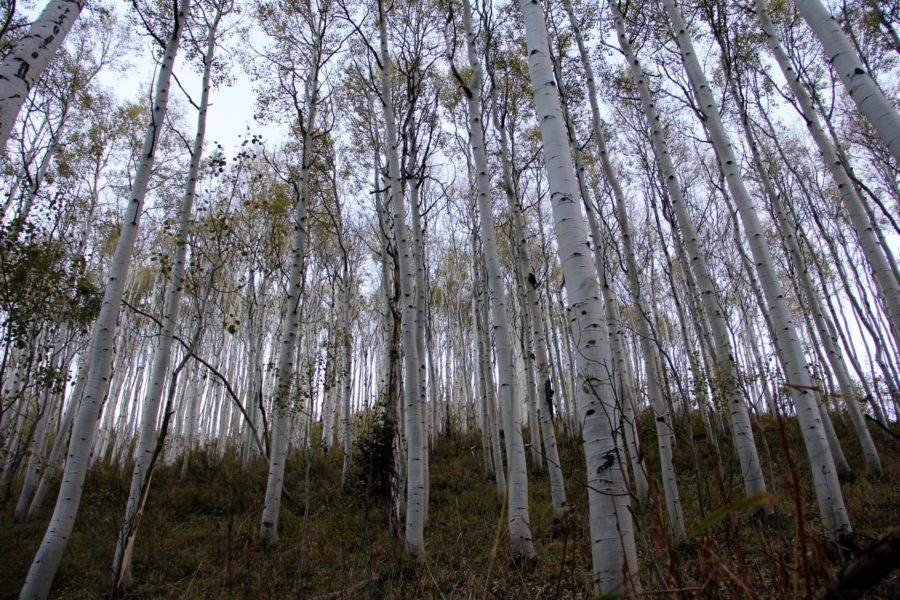 Hunting the aspens in Utah with R&K Hunting Company