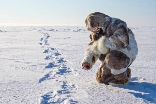 Tracking polar bears across the ice. This is the best polar bear hunt in the world.