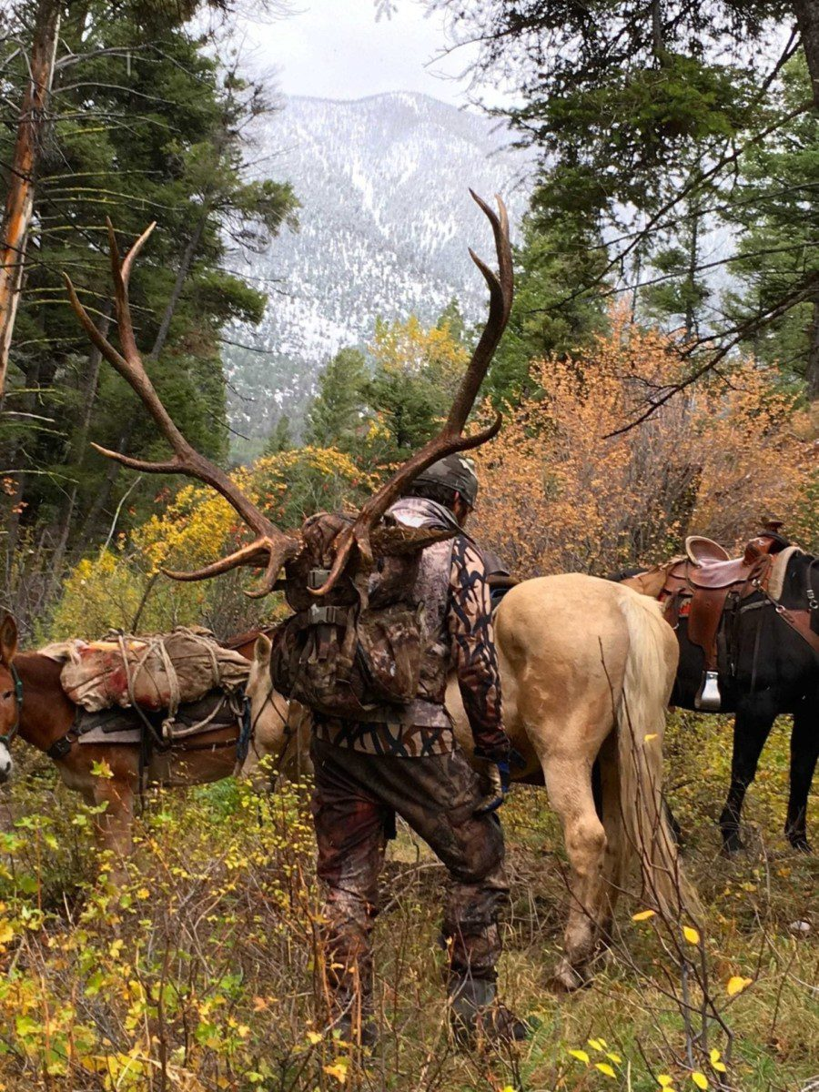 Packing out a bull elk
