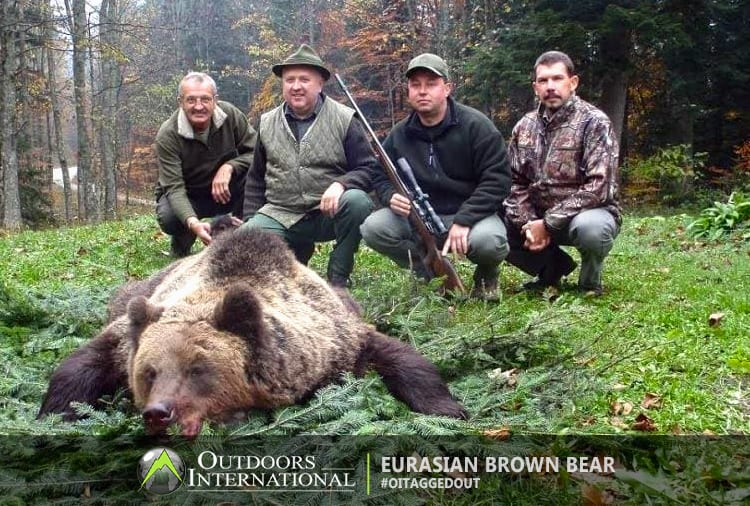 Spring and Fall hunts are available in Croatia for Eurasian brown bears.