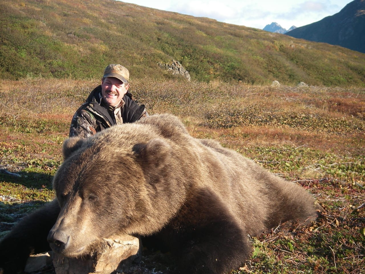 A huge Arctic Grizzly