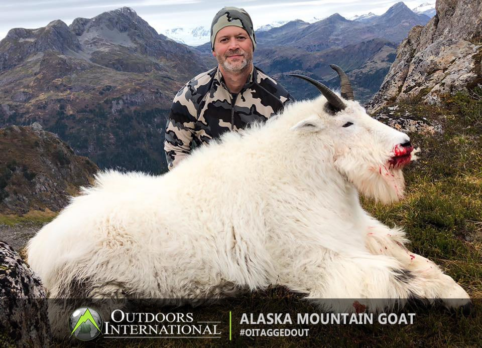 Alaska Mountain Goat