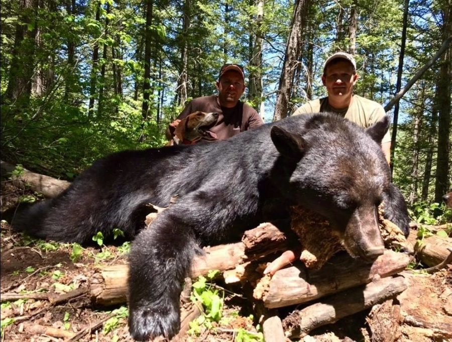 Chris Bowen Utah black bear