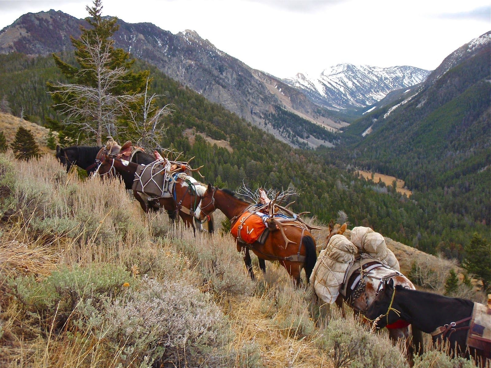 Elk Hunting Drop Camps