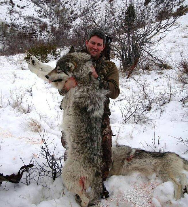 Brent Martell with two Idaho wolves.