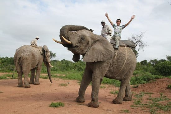 Elephant ride in south africa