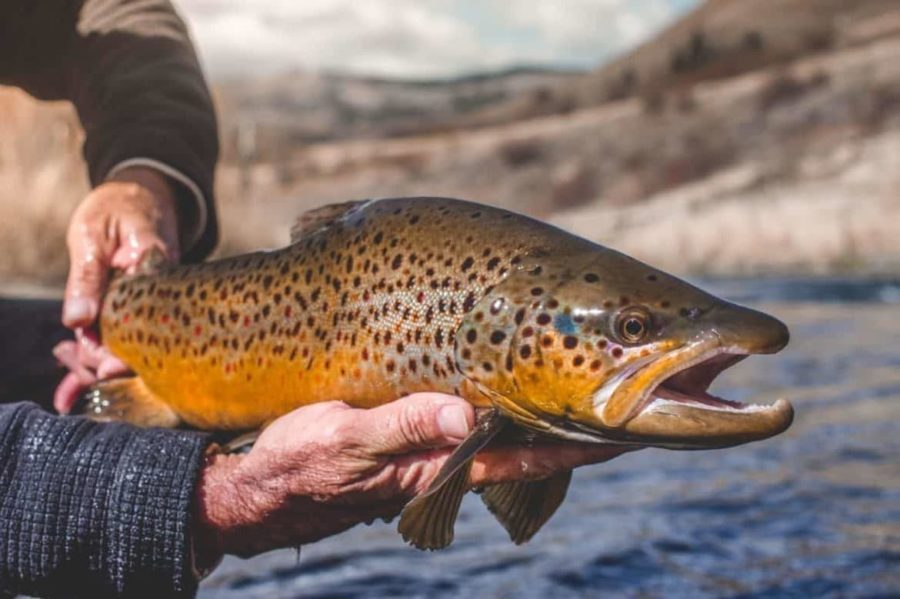 colorado fly fishing guides