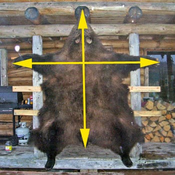 How to square a bear hide