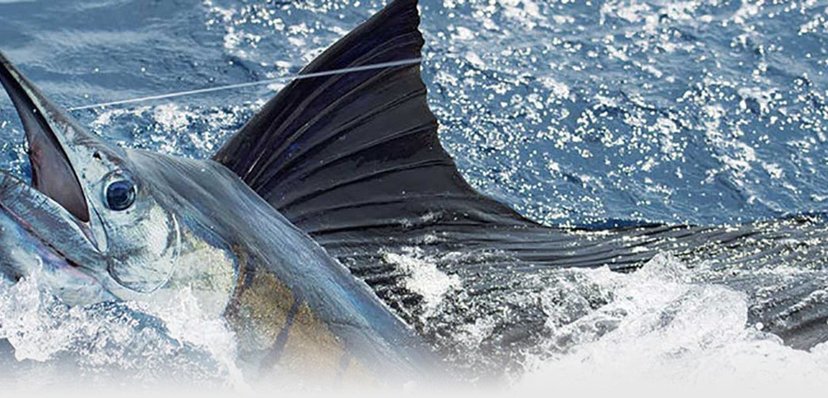 We have the best Sailfishing destinations!