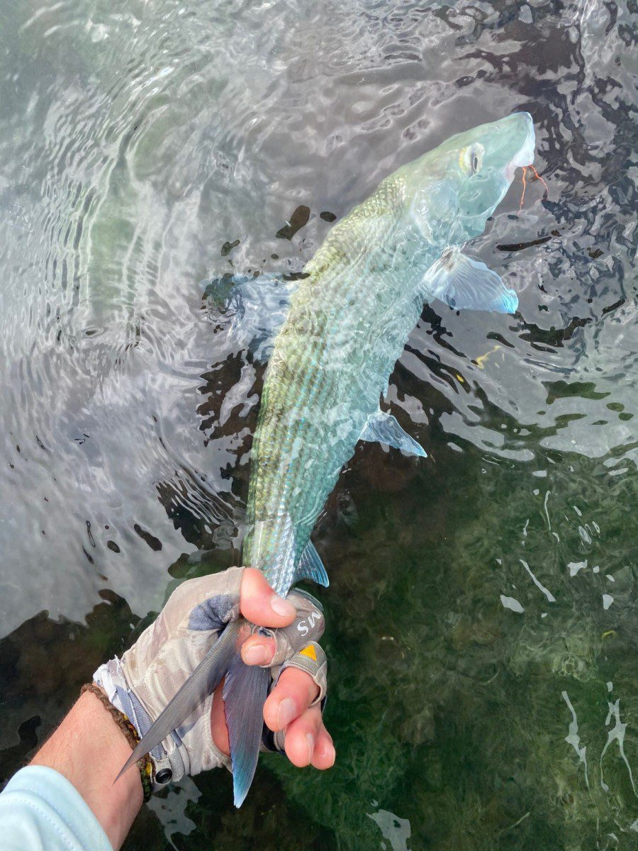 Bonefishing is excellent year round and our water temps do not fluctuate with cold front like farther north such as the Florida Keys or Bahamas.