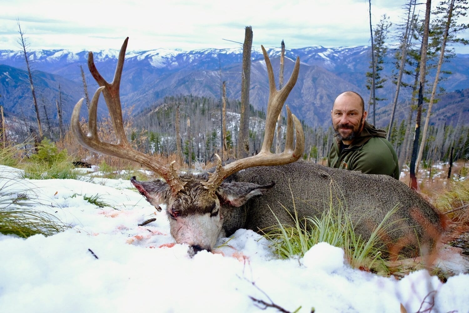 Idaho Wilderness Horseback Elk & Mule Deer Hunts with Wilderness Mule Outfitting