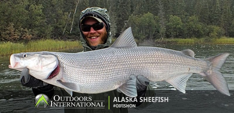 Alaska sheefish