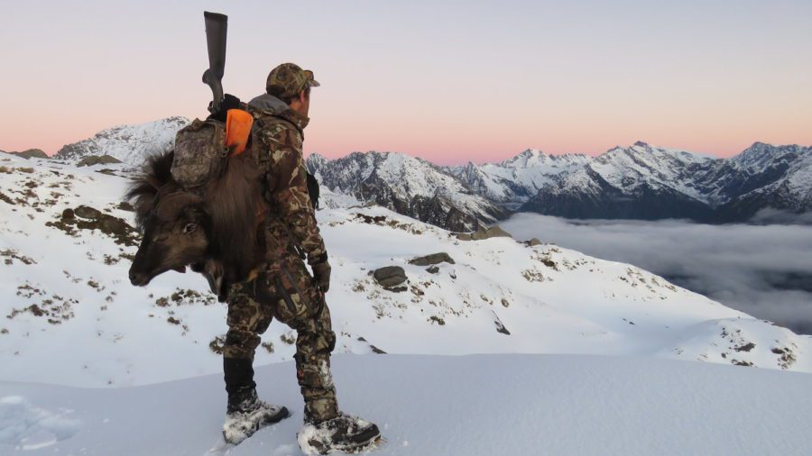 A guide packing out a tahr in New Zealand.